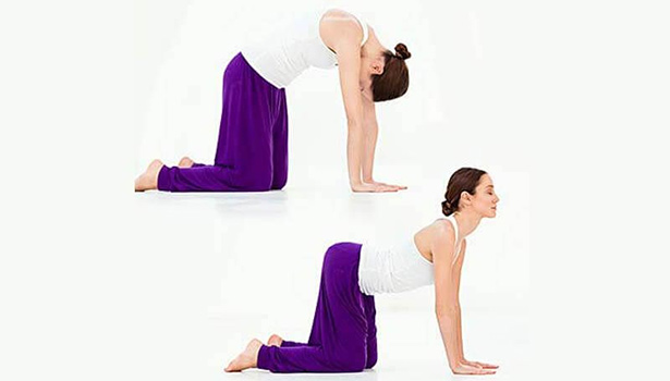 arjariasana,annaimadi.com,yogasana,ypga for backpain,marjari aasana for neck pain,மர்ஜாரி ஆசனம் செய்யும் முறை