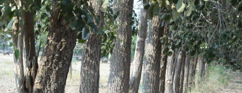 Coolness of sandalwood,அன்னைமடி, முக அழகிற்கு சந்தனம்,சந்தனத்தின் நன்மைகள்,medicinal value of Sandalwood,Sandalwood,annaimadi.com,benefits of sandalwood